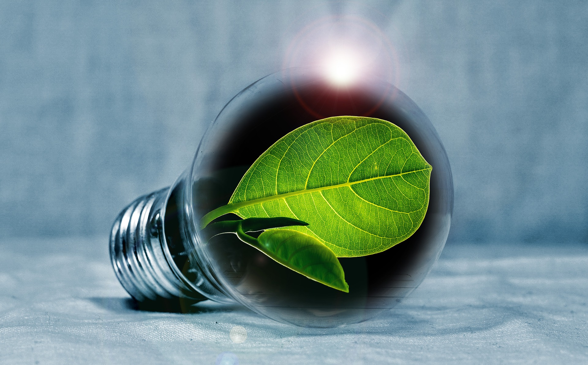 lightbulb with a green leaf in it