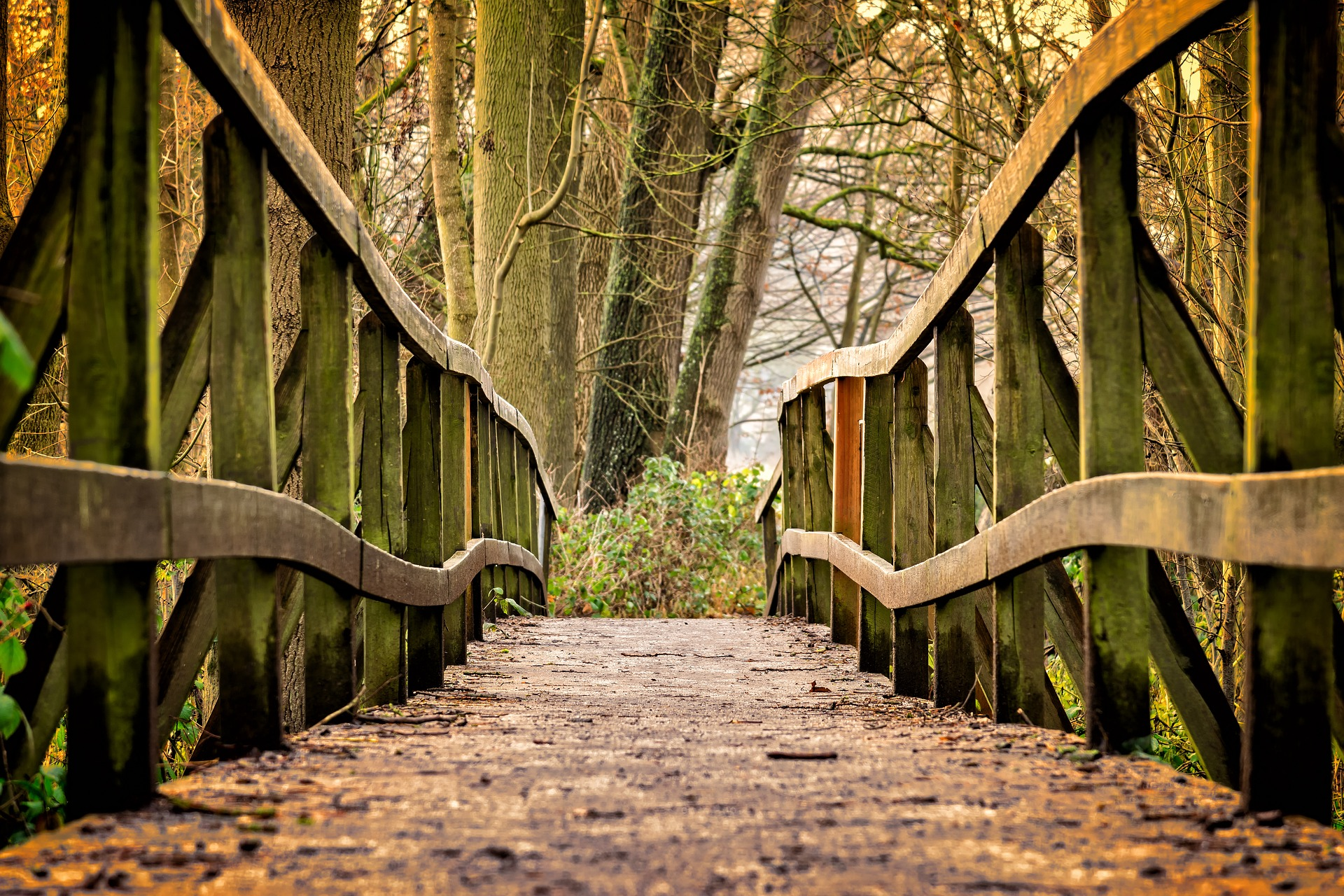 wooden bridge going through the forrest