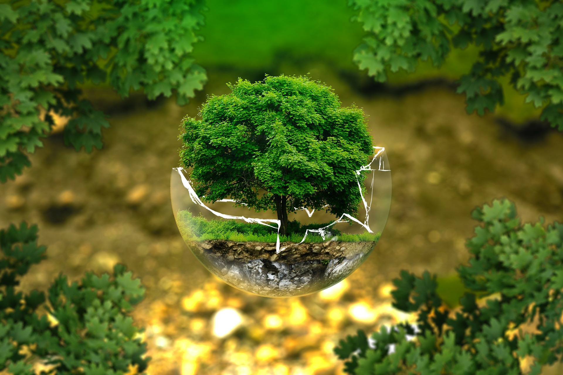 glass globe with a tree inside of it